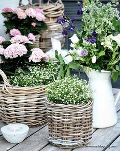 Dreams Come True: Terrasse und die am häufigsten gestellte Frage. Vertical Vegetable Gardens, Indoor Vegetable Gardening, Container Gardening, Balcony Plants, Balcony Garden, Little Gardens, Back Gardens, Garden Care, Dreams Come True