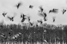 Birds found on pixabay.com
