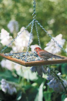 Make a bird feeder | Gardening Lab For Kids: 52 Fun Experiments