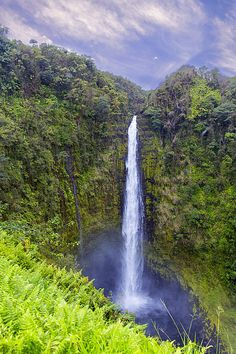 Akaka Falls State Park is a state park on Hawaiʻi Island, in the U.S. state of Hawaii. The park is about 11 miles north from Hilo, west of Honomū off the Hawaii Belt Road at the end of Hawaii Route