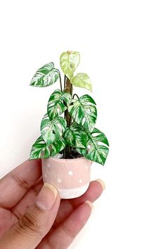 Paper Plants, Variegated Plants, Gift For Lover, Lovers Gift, Christmas Mom, Biscuit, Birthday Gifts For Women, Etsy Handmade, Handmade Gifts