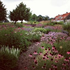 My show garden in TOLKAMER ( the Netherlands ) at the end of June, begin of July... It is free to visit...and open every day. Watch my…