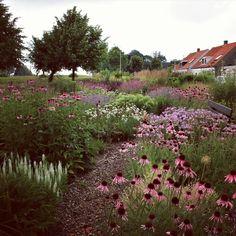 My show garden in TO