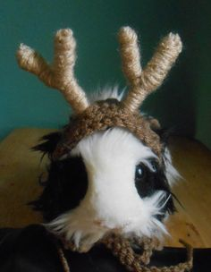 Guinea Pig Antler Hat, Guinea Pig or Ferret Clothes, Bearded Dragon Antlers, Pet Halloween Reindeer Antlers Costume, Tiny Pet Outfit