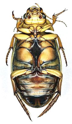 scanographies of beetles - Google Search