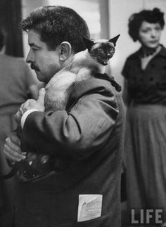 "George Silk, ""Los Angeles cat show,"" 1952. Source: LIFE Photo Archive, hosted by Google."