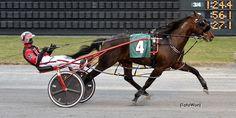 Montrell Teague talks about the special place in his heart for Custard The Dragon! Read the full story here. Harness Racing, Custard, Horses, Dragon, Animals, Heart, Cream, Animales, Animaux