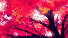 Red-all-year maple