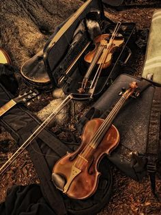 Violins are so beautiful