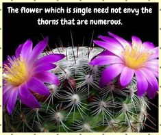 The flower which is single need not envy the thorns that are numerous. Beautiful Flower Quotes, Beautiful Flowers, Flower Delivery, Envy, Nature Photography, Congratulations, Bouquet, Anniversary, Usa
