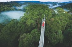The rainforest canopy walk at Ulu Temburong is the one of the longest in the world and highlight of a trip to this national park, Brunei