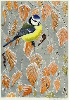 Blue Tit - Robert Gillmor (b. Birds Painting, Typography Prints, Linocut Prints, Wildlife Art, Nature Art, Art And Craft Design, Painting, Screen Printing Art, Bird Prints