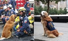Meet Bretagne, the last surviving rescue dog from Ground Zero