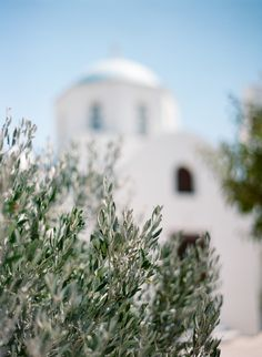 Olive Trees and a White Chapel in Santorini | photography by http://www.cinziabruschini.it