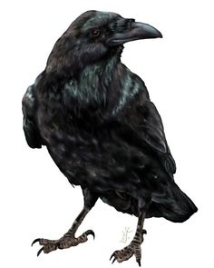 crow | More from CROW-DIE
