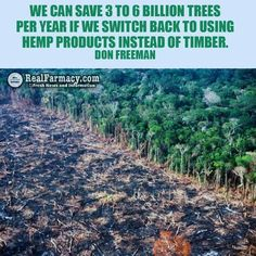 We can save 3 to 6 billion trees per year if we switch back to using hemp products instead of timber. Don Freeman