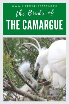 Read about where to see the Camargue Flamingos. Explore the Camargue Ornithological Park in France. The Camargue wetlands is home to thousands of pink flamingos and other bird species. European Road Trip, Road Trip Europe, Road Trips, Travel Around The World, Around The Worlds, Once In A Lifetime, Bird Species, Pink Flamingos, Amazing Nature