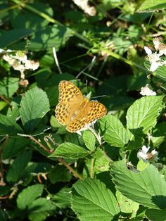 Butterfly, Niedersonthofen