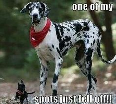 Spots If you love dogs, check out http://thedogbreedsbible.com/