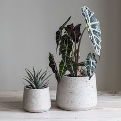 $36 large: 20wx16.5d Small: 13.5wx9d Stratton Cement Plant Pots - Set of 2 - Stone