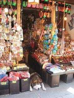akita minding the sweet shop-shibamata