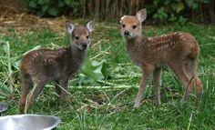 Saved by Hillside Animal Sanctuary