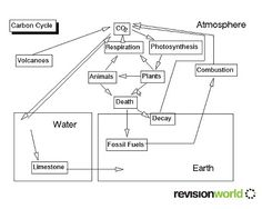 carbon cycle worksheet high school pdf