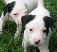 cutie patooties looking for a home in Maryland