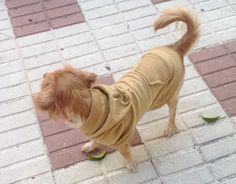 Sudadera perro algodón color mostaza, Camiseta, ropa perro. Diseño exclusivo de Mucka Pets. de MuckaPets en Etsy