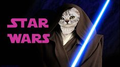 Star Wars Cats Fighting Funny Cat Videos, Funny Cats, Cats Fighting, Mafia, Star Wars, Stars, Youtube, Fictional Characters, Funny Kitties