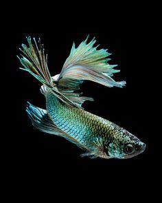 Les 62 Meilleures Images Du Tableau Tatoo Sur Pinterest Aquarium