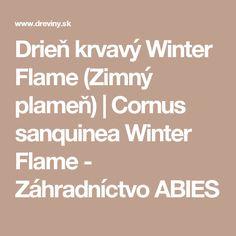 Drieň krvavý Winter Flame (Zimný plameň)   Cornus sanquinea Winter Flame - Záhradníctvo ABIES