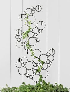 Modular Circle Wall Trellis Offers Creative Trellising Options    Versatile trellis offers a fun place to grow vining plants  Modular; pieces can be used singly or together in a variety of configurations  Combine multiple sets for even more impact and versatility