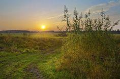 режимный свет, пейзаж, поле