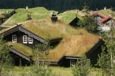 Norwegian grass roof tops LOVE this... all it's missing is a goat or two... or would it be a sheep. I think sheep eat the root but goats don't. I wonder if all sheep do?