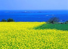 Jeju island ~ i will capture that blue and yellow someday...and i know YOU will be with me. <3