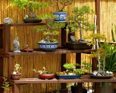 20 Lovely Bonsai Garden Ideas To Beautify Your Home - A bonsai garden can provide peace and relaxation for everyone in the family. All the effort that is put into growing and trimming a bonsai tree can ma. Bamboo Garden Fences, Garden Fence Panels, Asian Landscape, Landscape Design, Jardin Feng Shui, Feng Shui Garden Design, Japanese Fence, Japanese Style, Japanese Design