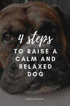 Regardless of the bread or age, it is possible to train any dog to be calm and relaxed. These simple and effective training techniques will have your pooch sleeping while your playing tennis in no time. And no it does not involve taking him for a 2-hour r