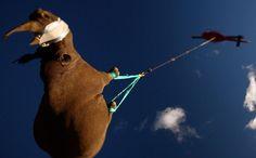 Flying rhino. Source: epa.