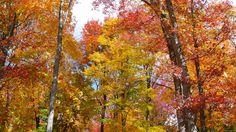 Orange, yellow, pink, gold, green, rust...BEAUTIFUL!
