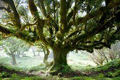 Speak to the old tree! by mari-we, via Flickr