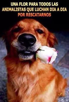 Una flor para todos los animalistas... Necesitamos mas gente así ❤