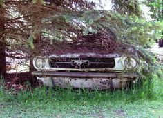 60's cars MUSTANG | 60's Mustang ~ This old horse has been put out to pasture... | Flickr ...