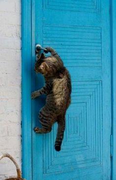 smart cat..