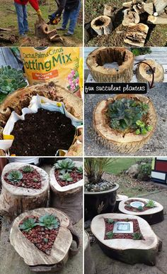 Succulent Planters Rotted Tree Trunk Pieces
