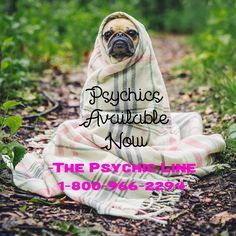 The Psychic Line offers the best telephone psychic medium readings. Call our psychic hotline for an accurate reading by one of our intuitive readers. Psychic Hotline, Medium Readings, Psychics, Psychic Mediums, Call Backs, Psychic Readings, Love And Light, Intuition, Tarot