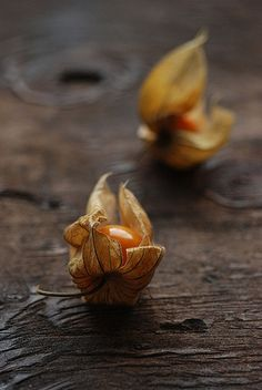 Physalis - Cape Gooseberries by {Susan Wolfe}