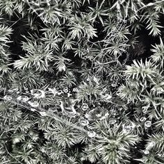 "Photo ""#blackandwhite#spidersweb#raindrops#nature#natureporn#statigram#instac"" by noo_noo76"
