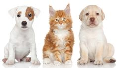 Cats are notoriously independent while dogs are amongst the most affectionate animals. The classic debate of dogs vs cats: pros and cons.