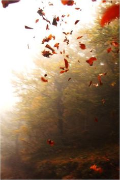 anthropologie:      Listen! The wind is rising, and the air is wild with leaves, We have had our summer evenings, now for October eves!    —Humbert Wolfe, Autumn (Resignation), 1926  Via: Gin & Bird